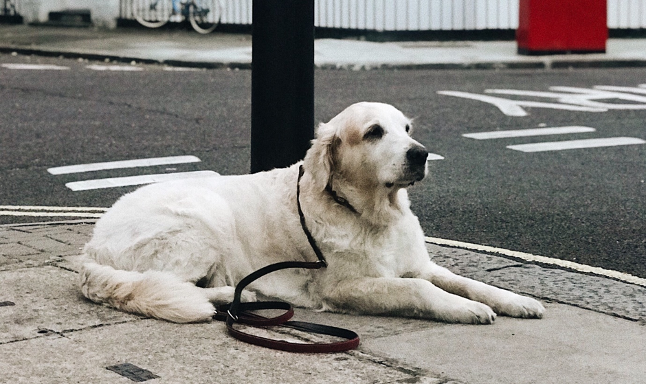 pet-friendly aparthotel, dog in london