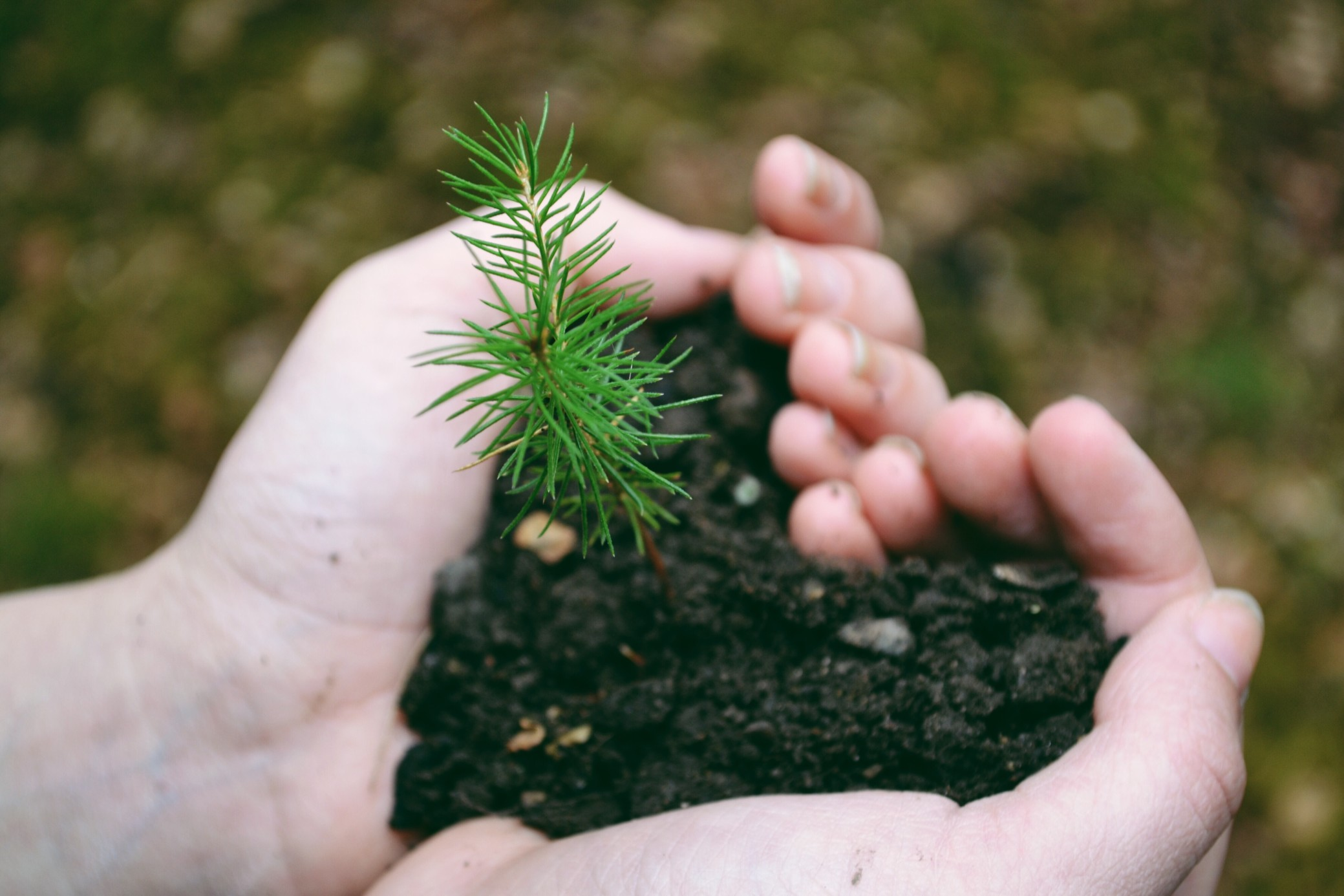 planting trees to capture carbon