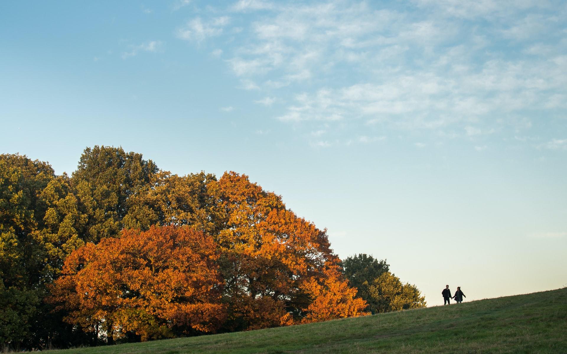 london park in autumn